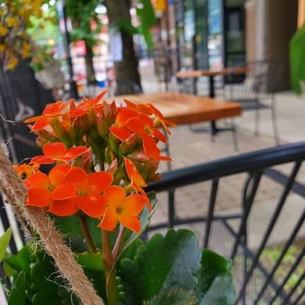 Orange - Roscoe Village best greek in chicago;